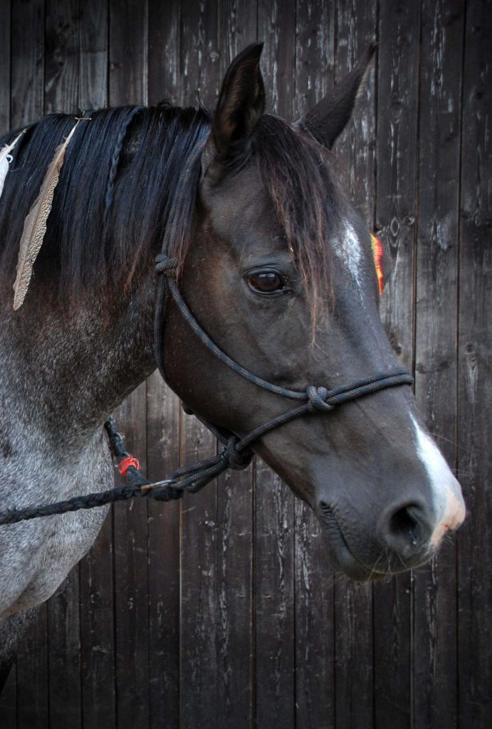 Black Horse Off Road >> Rope Halters for Horses   My Horse Handbook