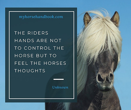 The Riders Hands Quote