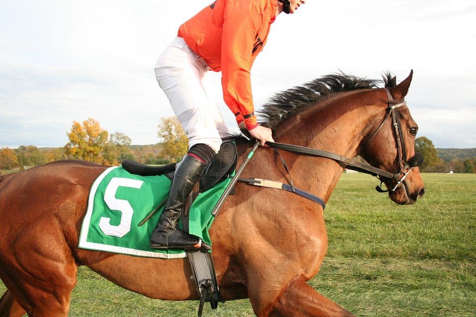 Racehorse in work