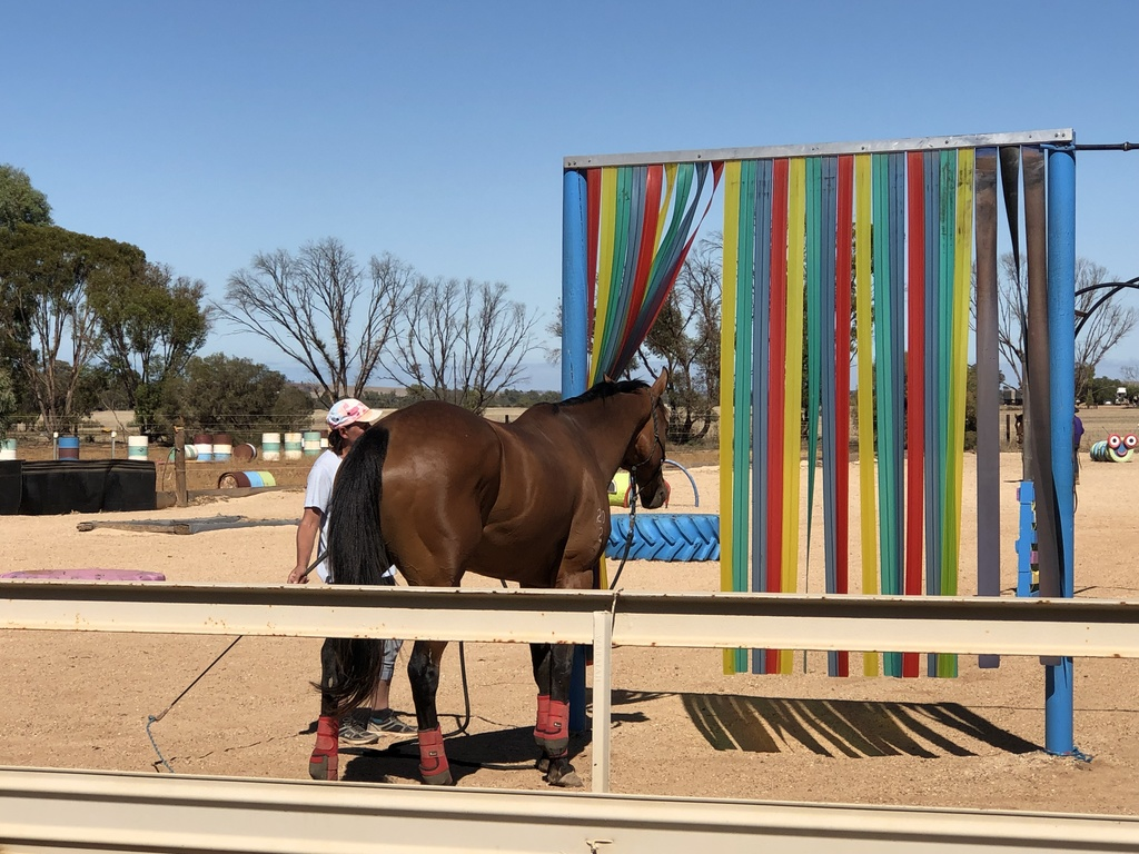 Retired racehorse trying agility obstacle